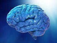 mózg człowieka 3d